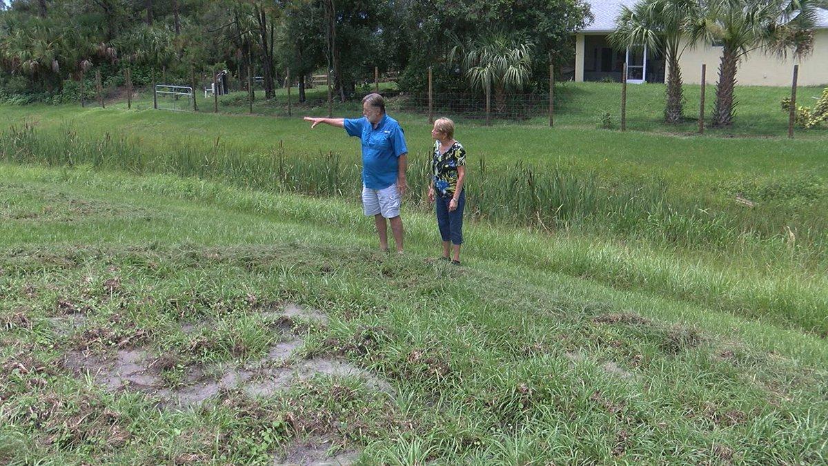 Wild pigs wreaking havoc in parts of Sarasota County.
