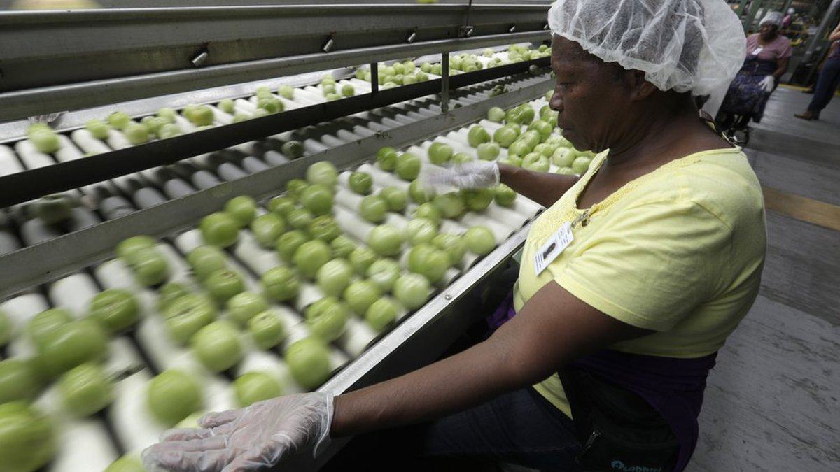A worker sorts through tomatoes after they are washed before being inspected and packed, in...