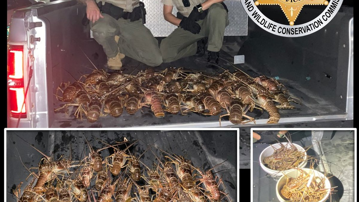 A fisherman was caught in possession of 39 spiny lobsters in Key Largo.