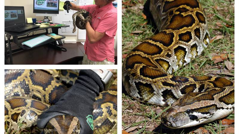 Python Patrol classes are offered online every third Thursday.