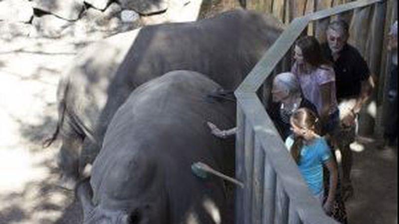 Child falls into rhino exhibit in Brevard County