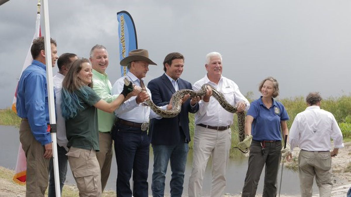Gov. Ron DeSantis helps hold a python at a news conference Thursday, June 3, in Miami.