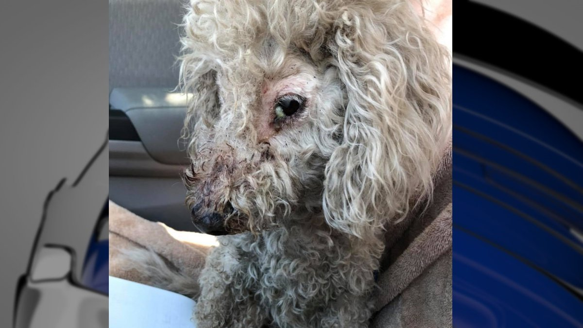 Petal will need multiple medical treatments after she