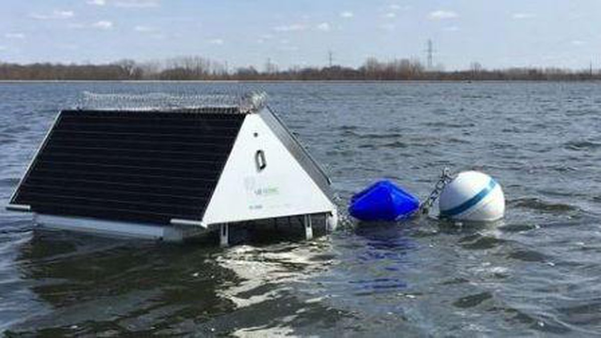 The buoys are designed to kill single cell algae, thus removing the need for chemical algae...