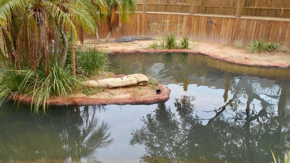 Police officers responding to reports of vandalism at the Alligator Farm Zoological Park found...