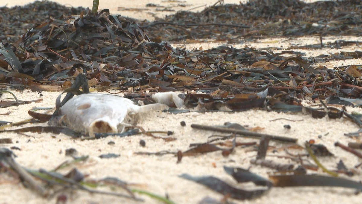 Red tide is caused by high concentrations of aquatic microorganisms, such as protozoans and...
