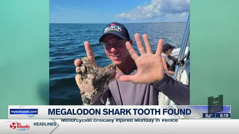 A 6 and 1/16 inch Megalodon tooth was found in the waters just off the Venice coast.