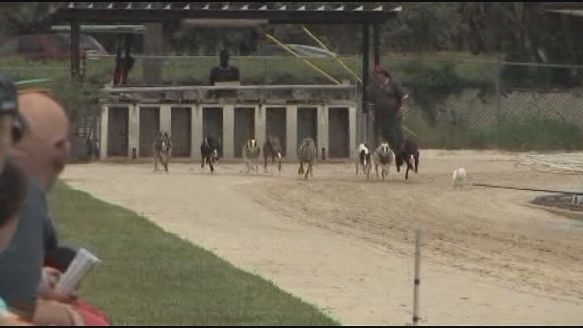 Start of Greyhound Dog Racing Season, could be last for Sarasota Kennel Club