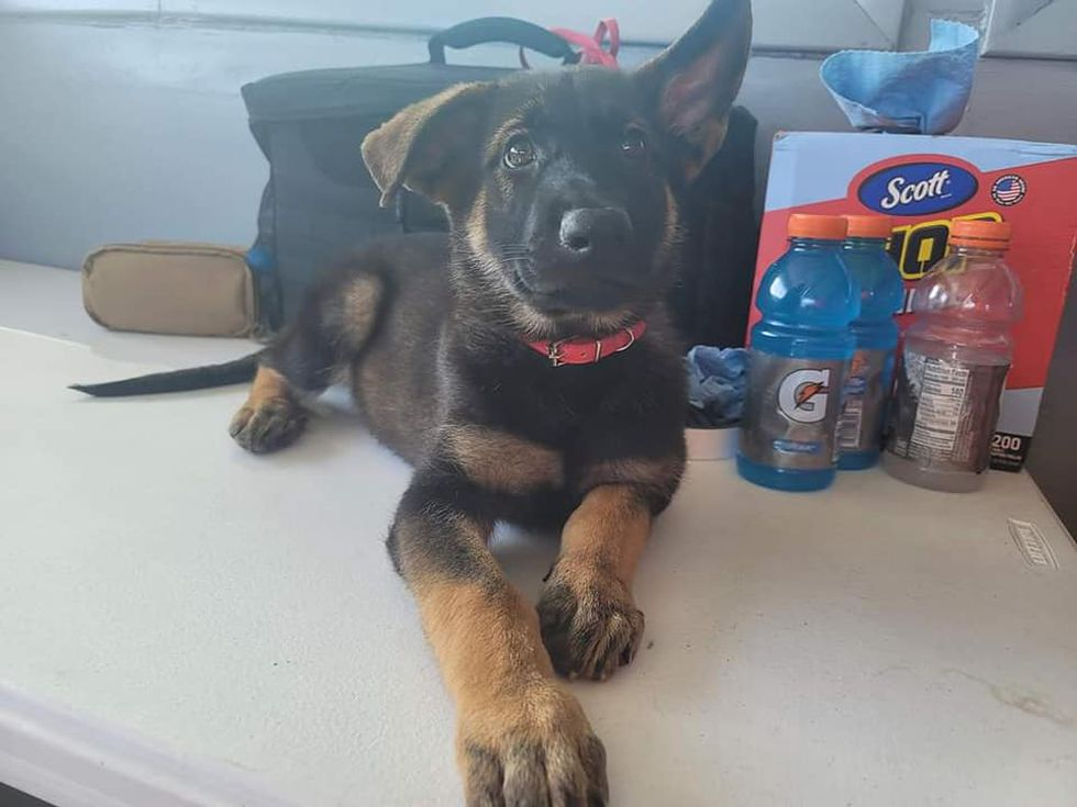 Manatee County Search & Rescue announces name of K-9 in training