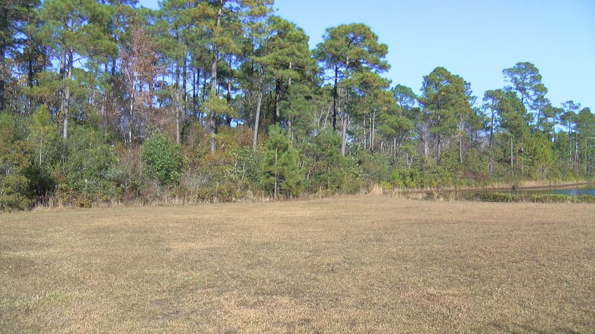 The view from Rich McAndrew's backyard could soon have a hospital behind the trees.