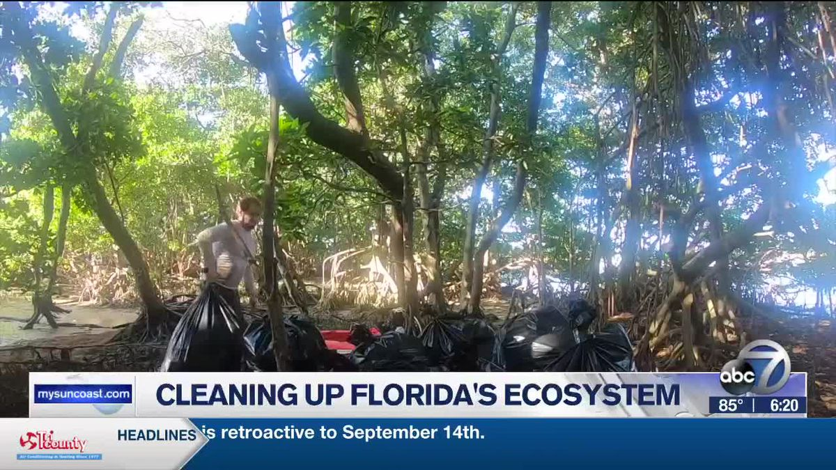 Cleaning Up Florida's Ecosystem