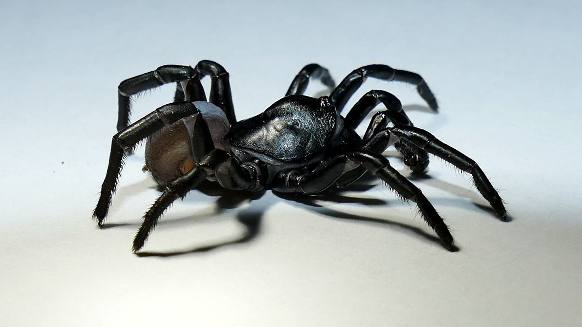 Zoo Miami staff helped discover a brand new species of large spider