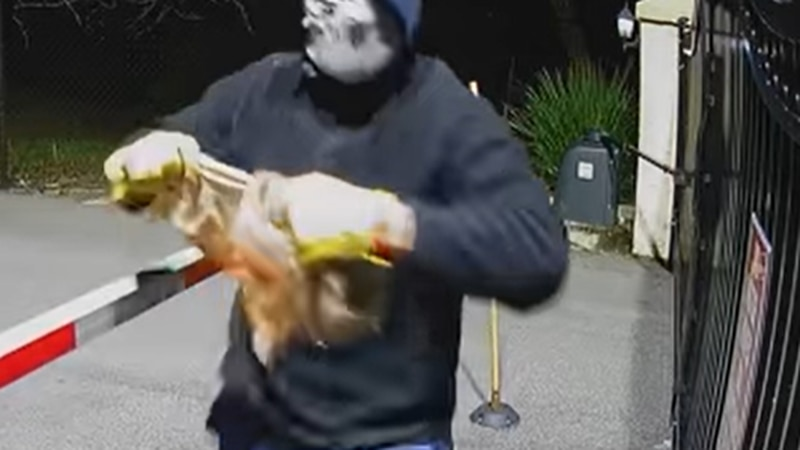 Charlotte County Sheriff's Officials are searching for the subject who broke into a golf shop.